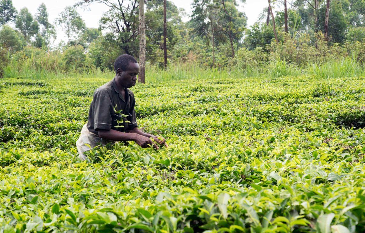 Med nye oppbevaringslagre kan kenyanske bønder tjene bedre på avlingene sine. Ved matvaremangel selges avlingene til rettferdige priser til de fattige.