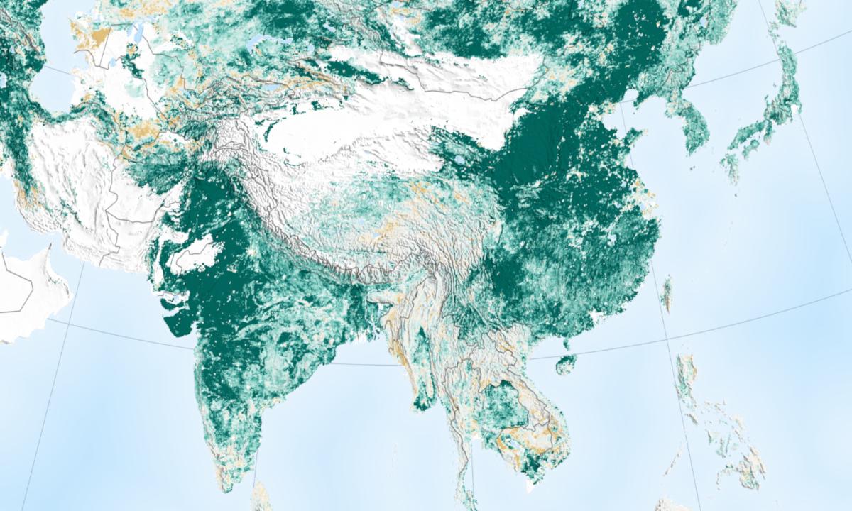 Satellittbilder fra NASA viser at jorden har blitt grønnere de siste 20 årene. Treplanting og landbruk i Kina og India har bidratt stort til den positive utviklingen.
