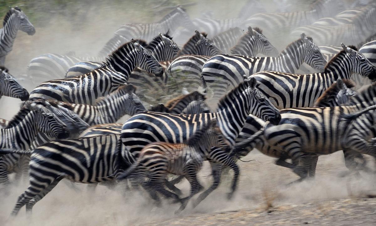 Ny studie viser at når østafrikanske land freder områder, beskytter det naturen mot å bli omgjort til landbruksjord.