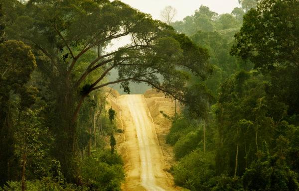 En av verdens største regnskogland vil nå gjøre et midlertidig avskogingsforbud permanent. Det er gode nyheter for både klimaet og for landets truede orangutanger.