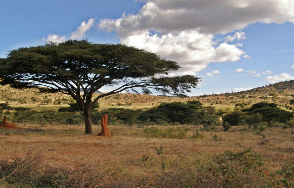 Etiopia er eit av mange land som har sett eit aukande avskogingsproblem dei siste tiåra. I følgje FN har andelen skog i landet gått frå 35%, til berre 4% i løpet av dei siste åra.