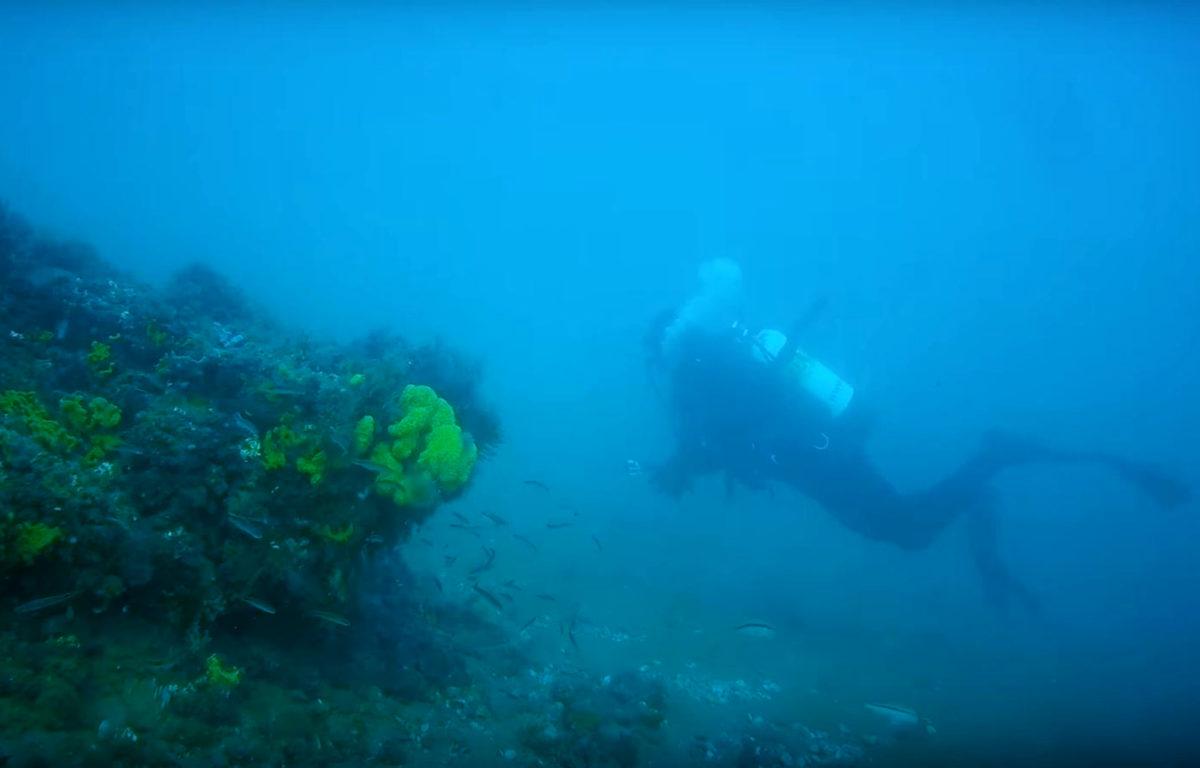 I Australia blir viktig undervannsnatur gjenopprettet ved å gi muslingsskall fra restauranter tilbake til havet.