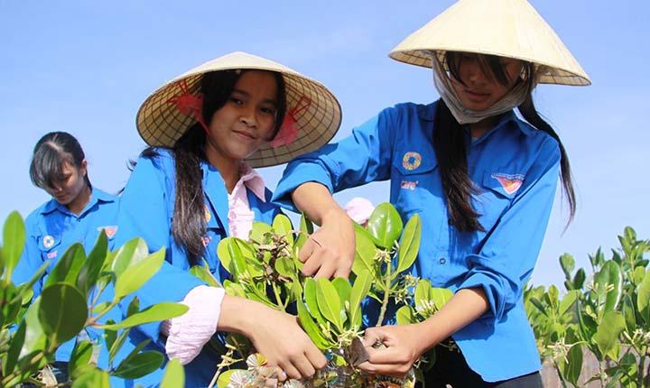 Et 200 meter bredt mangrovebelte skal beskytte naturen.