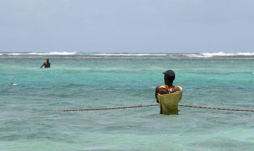 "CC BY Giorgio Montersino En såkaldt ""fodfisker"", der fisker med garn i lavvandområder."