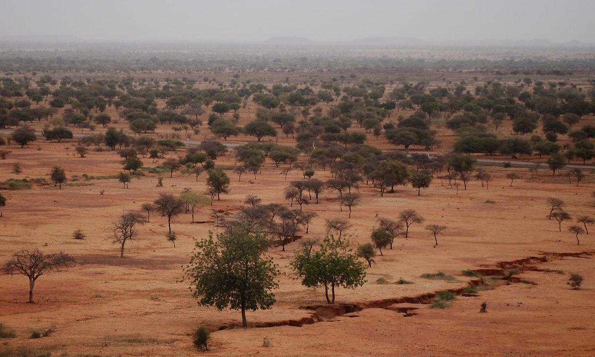 Et 8000 kilometer langt belte av trær skal danne en grønn mur på tvers av det afrikanske kontinentet. Målet er å skape jobber, bekjempe sult og tørke langs Sahara-ørkenens sydlige grense.