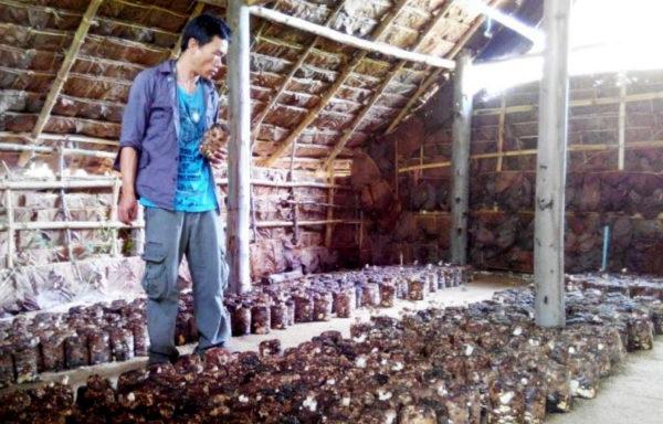 En gruppe hiv-smittede i Thailand har jobbet seg til høyere inntekt og mer respekt i sitt lokalområde ved å dyrke og selge spiselig sopp.