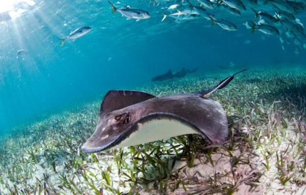 Verdens nest største korallrev, Belize Barrier Reef, har blitt fjernet fra UNESCOs liste over akutt truede områder etter massiv innsats fra lokalbefolkningen.