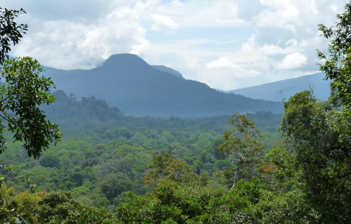 Indonesia har langt på vei lyktes i å bremse ødeleggelsen av landets regnskog. Den særegne regnskogen er blant annet hjemstedet til orangutanger og andre truede dyr og planter.