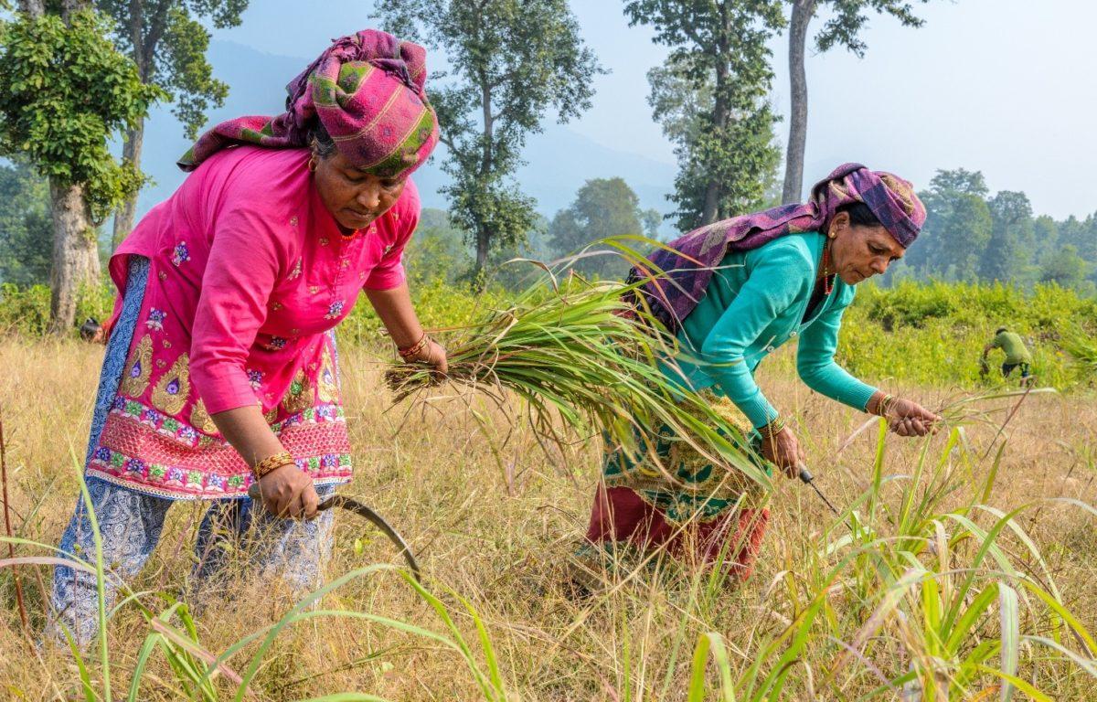 I stedet for å bruke den lokale skogen som brensel, har kvinner i Nepal begynt å dyrke planter som kan selges til bruk i kosmetikk. Det gir en viktig inntekt til fattige landsbyer.