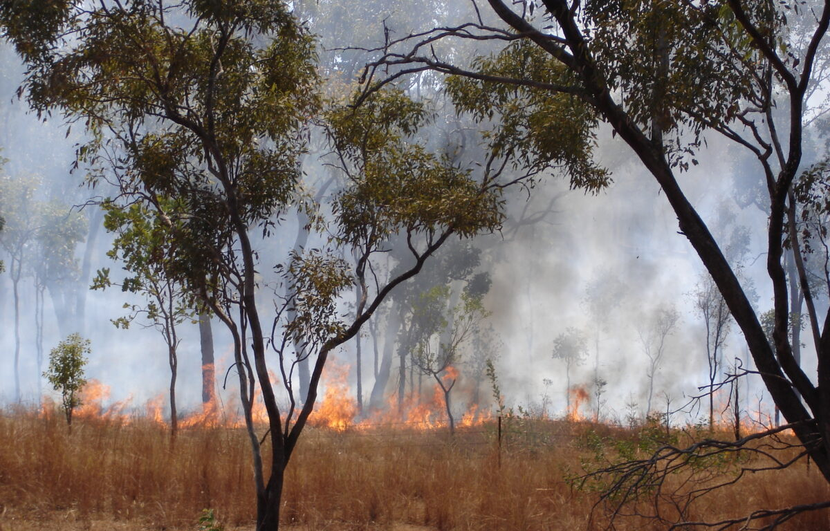 Tungt regnfall har bidratt til at New South Wales i Australia nå er uten skogbrann for første gang på åtte måneder.