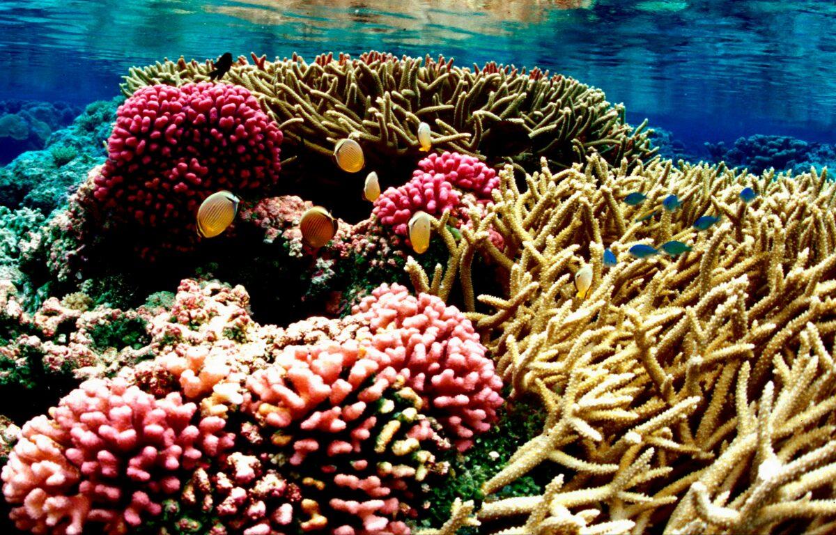 I fremtiden vil en rekke øy- og kystnasjoner få gratis adgang til satellitteknologi til å overvåke de fargerike og viktige økosystemene.