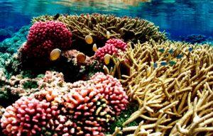 Snart får en række ø- og kystnationer gratis adgang til satellitteknologi som skal overvåge koralrev. Foto: Jim Maragos/U.S. Fish and Wildlife service CCBY