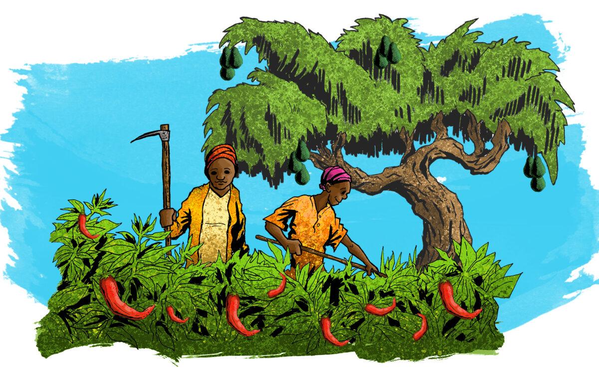 Småbønder i Uganda forsøker seg i økende grad på økologi og 'skoglandbruk'. Overgangen er ikke drevet av idealisme, men av nødvendighet – de har bare bruk for noe å høste. <br />