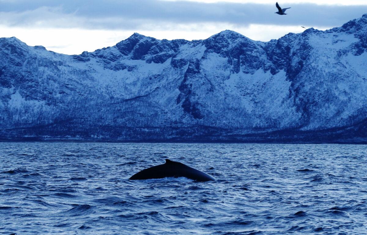 Utrolig nok mener forskerne at livet i havet kan gjenopprettes i løpet av bare én generasjon.