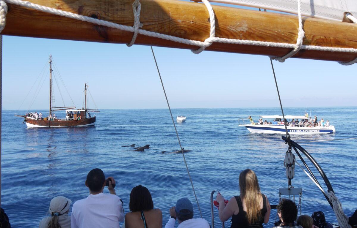 Et havområde utenfor Tenerife har blitt utropt som Europas første hvalpark. Det skal gjøre hvalturismen mer bærekraftig og bedre beskytte de store dyrene.