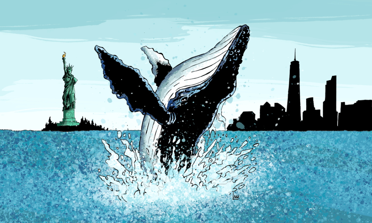 I det siste tiåret har hvalbestanden økt. I mange tiår har verdens hvaler blitt presset av kommersiell hvalfangst, men man kan nå se effekten av forbudet mot hvalfangst.