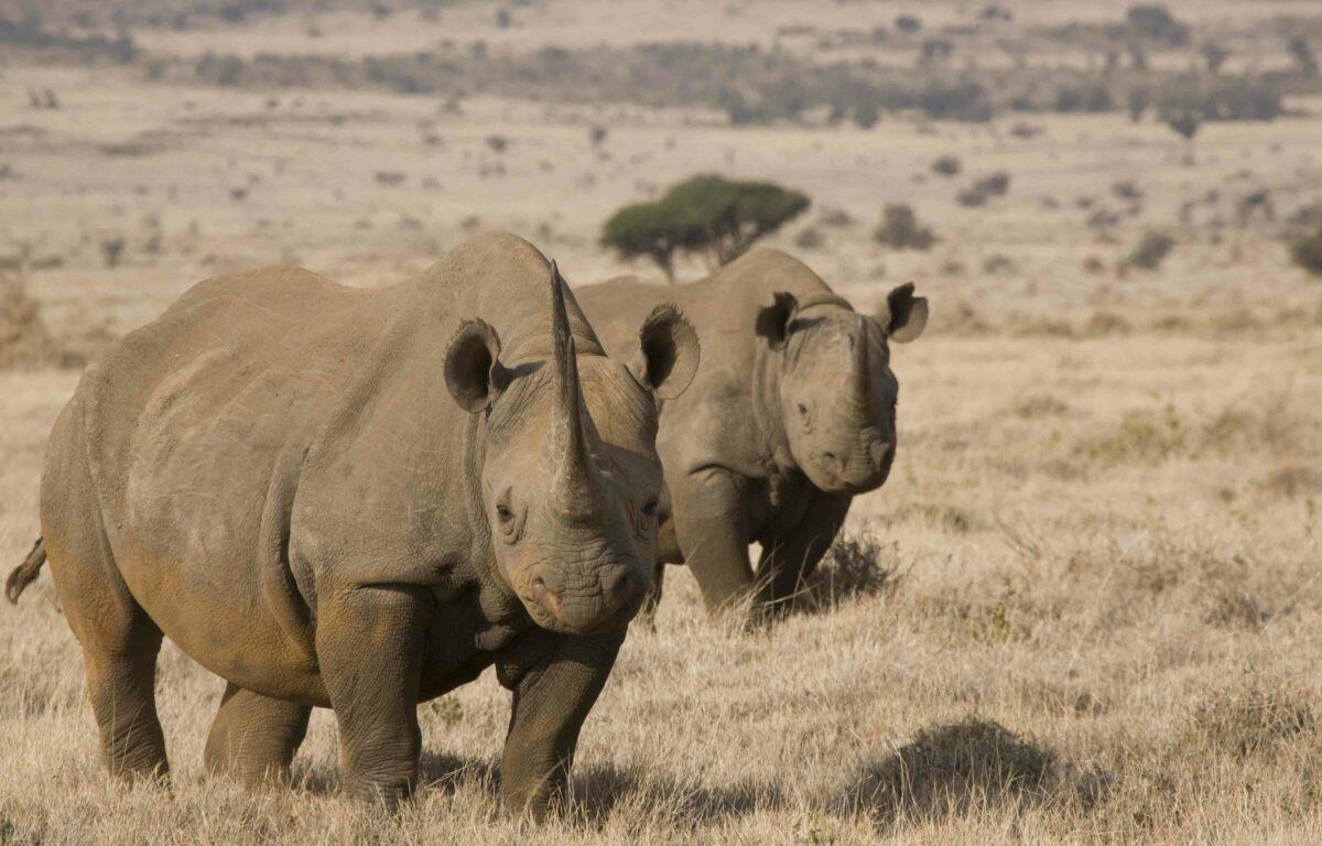 Til tross for klimaendringer og naturforandringer har det blitt dokumentert en rekke store framskritt på dyrefronten så langt i 2021.
